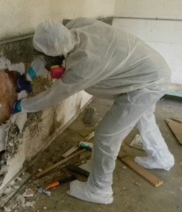 mold remediation virginia beach